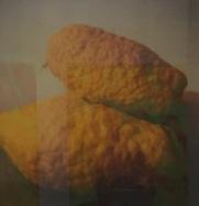 Cy Twombly: cat. 127 à 143 Lemons (Gaète), 1998-2008 © starkandart.com